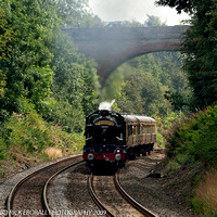 _DSC3900-2 The Earl Of Mount Edgcumbe at Shrewley common cutting