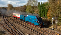 BITTERN LE TYSELEY TO SOUTHALL 05.11.2014